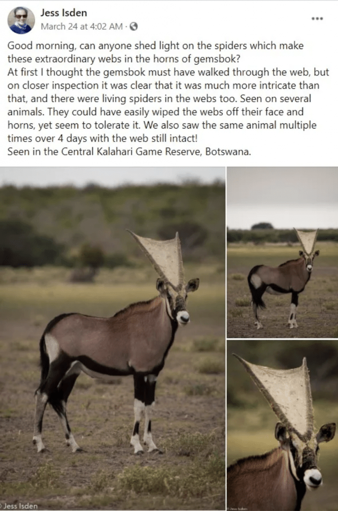 Dr. Jess Isden's Facebook post about the original photograph. Source: Snopes