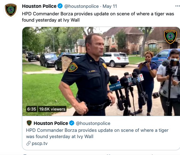 Was a tiger wandering streets?