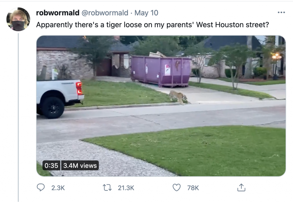 A tiger wandering Houston streets.